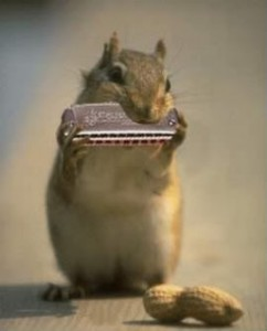 Hipster harmonica playing squirrel