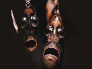 Pix o' Creatures of the Deep: Pictures - Hatchet fish - deep sea dweller