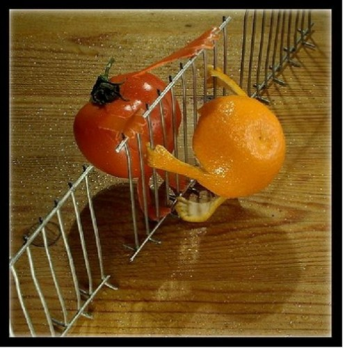 Orange and tomato from opposite sides of the fence