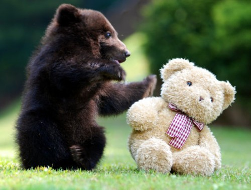 Bear best-friends-forever
