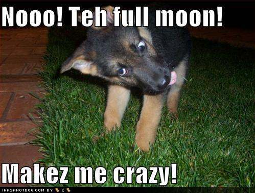 funny-dog-pictures-werewolf-dog