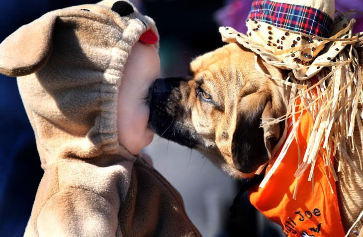 Doggy kiss - awww, how cute