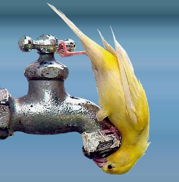 Animal pix - Thirsty bird
