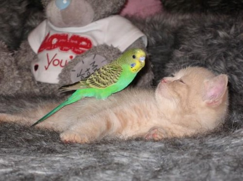 Cat and bird play