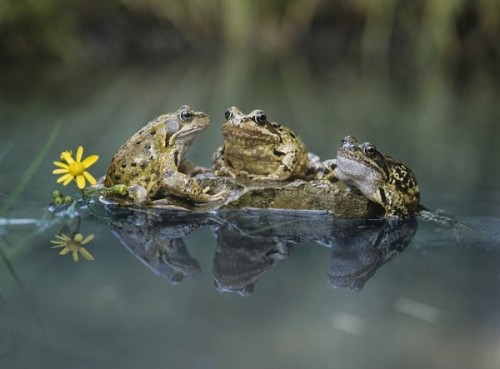 Frog conference