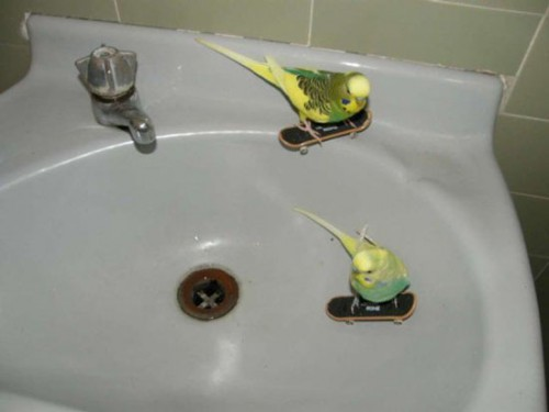 Funny Interesting Weird Random Pictures - birds skateboarding