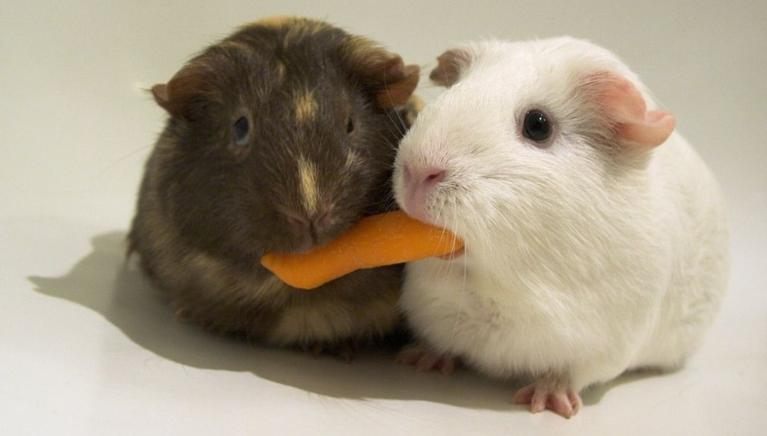 hamsters on a biscuit