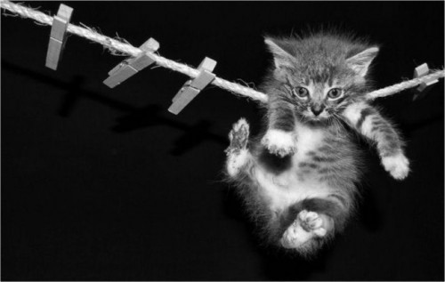 Gymnast kitten training for pet olympics