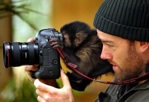 LOL Everything funny pictures and images - photographers assistant