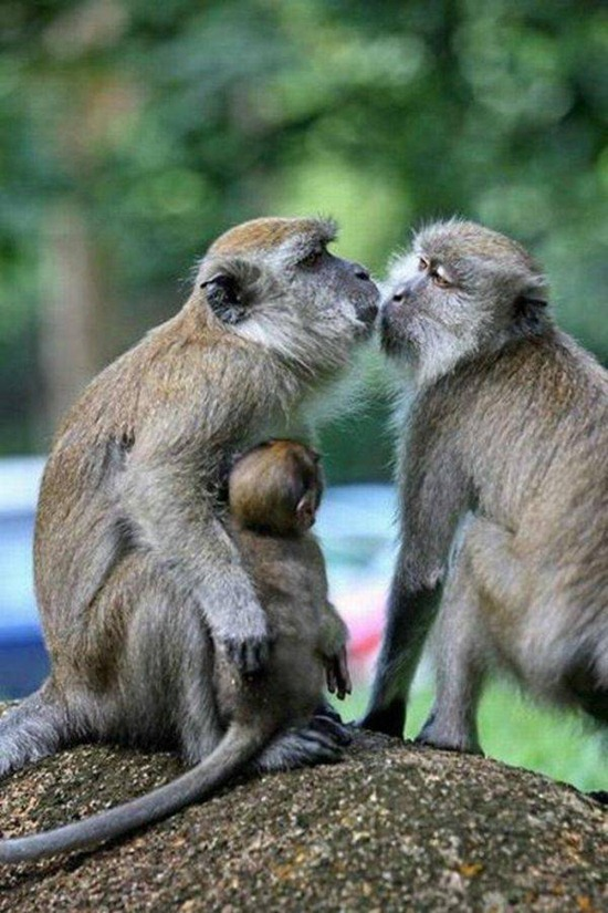 Animal kisses_cool pictures