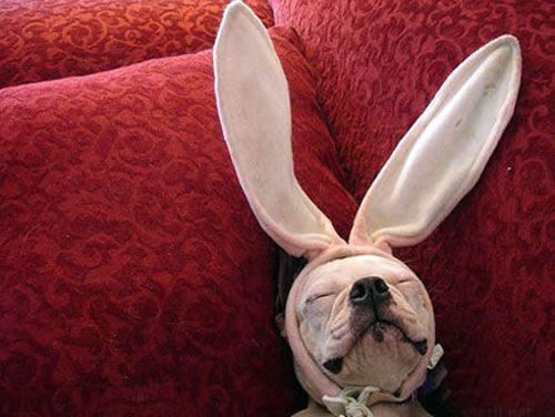 The Easter Doggie