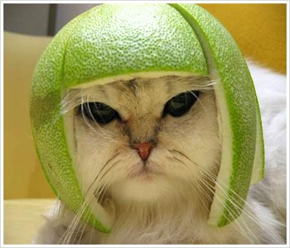 cat with the melon head