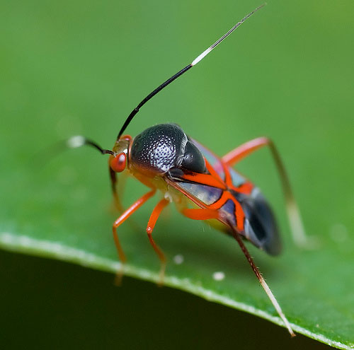 ugly bugs dating site
