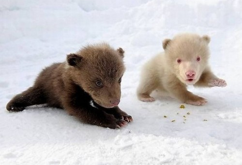 So cute little baby bears