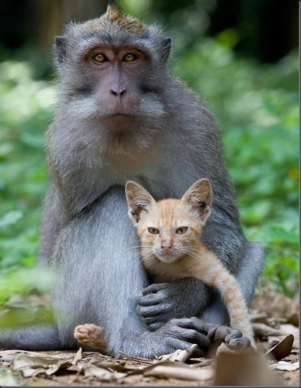 monkey loves kitten