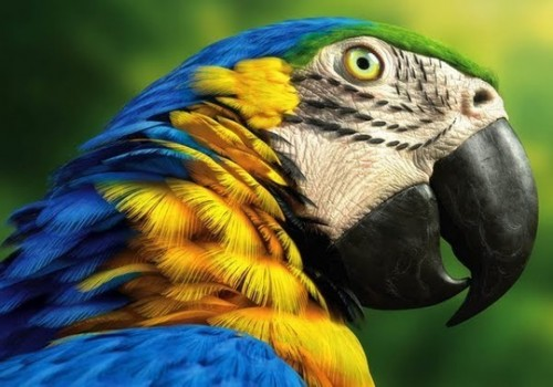 cool animal pics - parrot close up