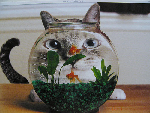LOL cat reflection in a fishbowl