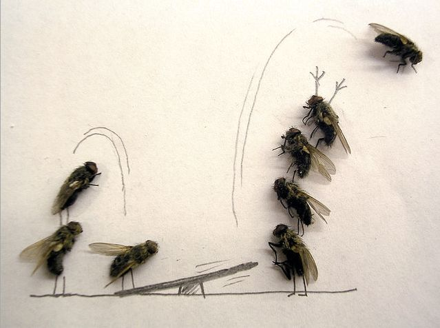 Dead fly art - so cool - Dead flies bouncing off the see saw
