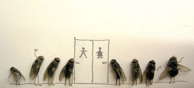 Dead fly art - kind of sick, very cool - Dead flies lining up for the pisser
