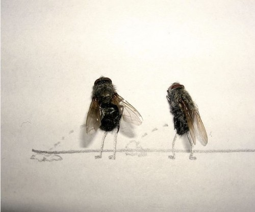 Dead fly art - so cool - Flies taking a leak