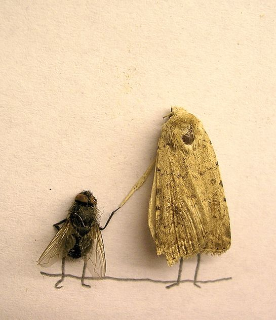 Dead fly art - kind of sick, very cool - Fly and moth friend