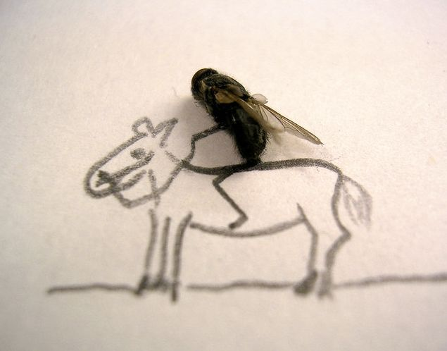 Dead fly cowboy riding his steed