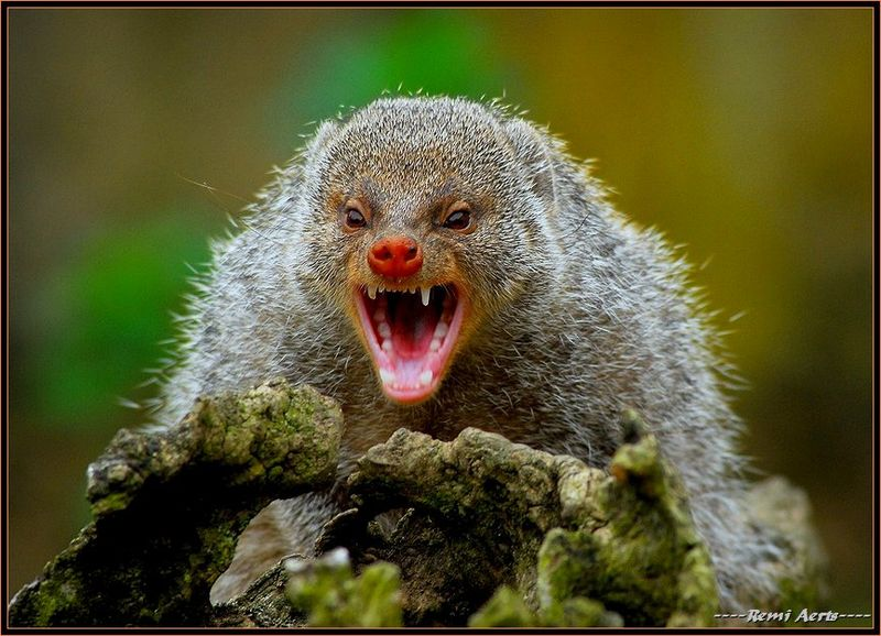 List o top 10 world s most dangerous animals scary angry bear