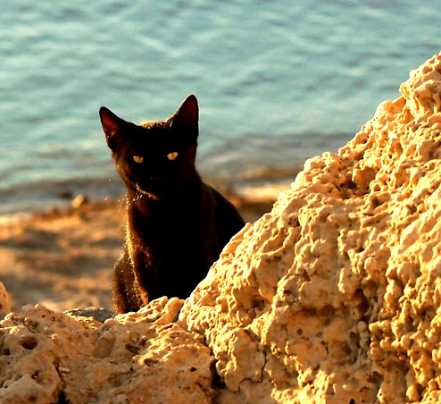 black-cat- at the ocean