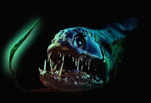 List o' 10 Creatures From the Ocean Depths: dragonfish