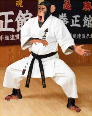 http://cdn2.listsoplenty.com/listsoplenty-cdn/uploads/2010/01/fighting_karate_monkey-13078.jpg