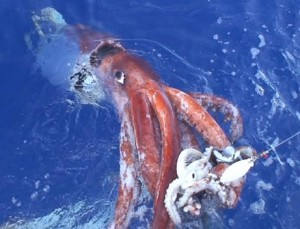 Creature of the Deep: giant-squid