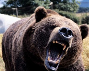 List o' Top 10 World's Most Dangerous Animals - scary angry bear