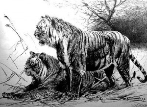 List o' 10 Recently Extinct Animals - Caspian Tiger