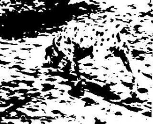 List of optical illusions - dog in the dots