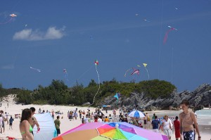 Lots of kites