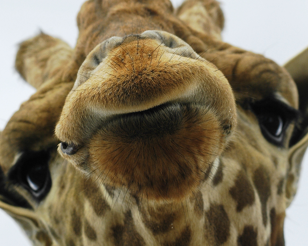Close Up Animal Faces – Smile For the Camera! | Pix o' Plenty
