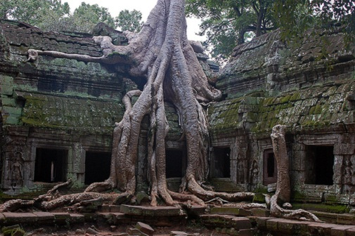 Silk-Cotton-Trees-of-Ta-Prohm-Cambodia