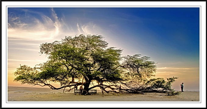 Tree of Life bahrain