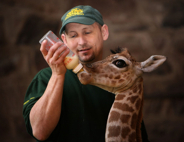 List of Top Ten Jobs Where You Dont Have to Deal With People - Zookeeper