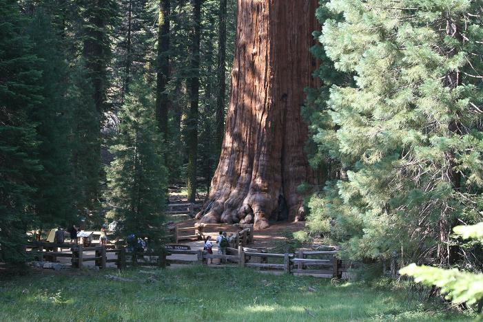 general_sherman worlds largest tree - sequoia tree
